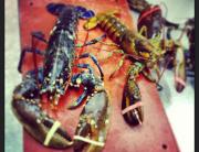 lobsters-ok